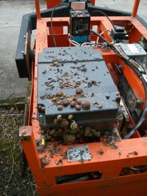 Snail maintenance